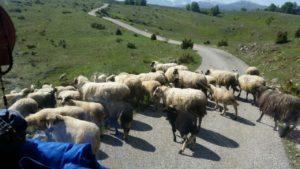 letnji booking smestaj planina durmitor grad zabljak reka rijeka tara crna gora obilasci ture rafting tarom kanjon tare ovce